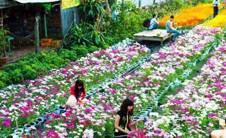 Ngành Nghề Gì 2019 Ở Nông Thôn Phát Triển